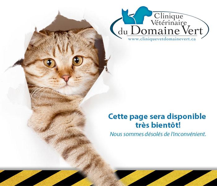 clinique-vet-domaine-vert-page-construction