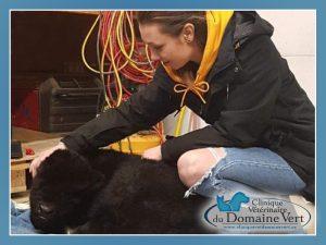 Mylène Surprenant, Technicienne en santé animale | Équipe Clinique vétérinaire du domaine vert, Mirabel