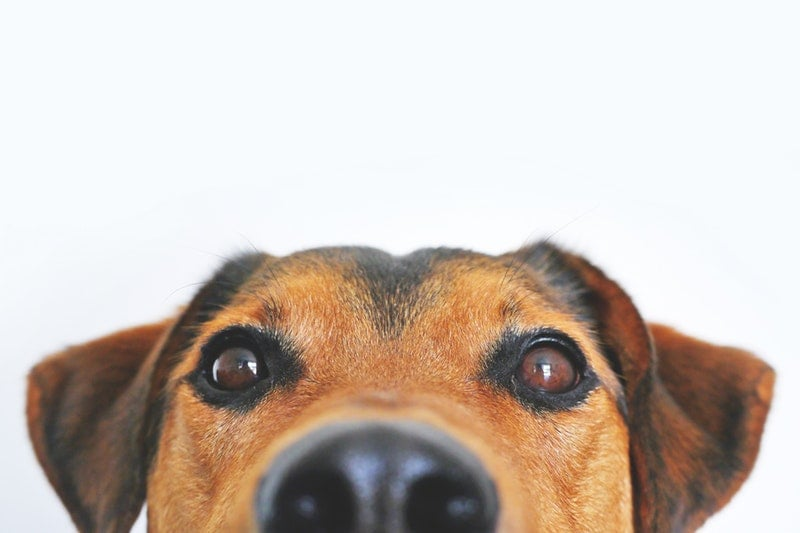 Chien avec un regard coquin. Photo by Lum3n.com from Pexels