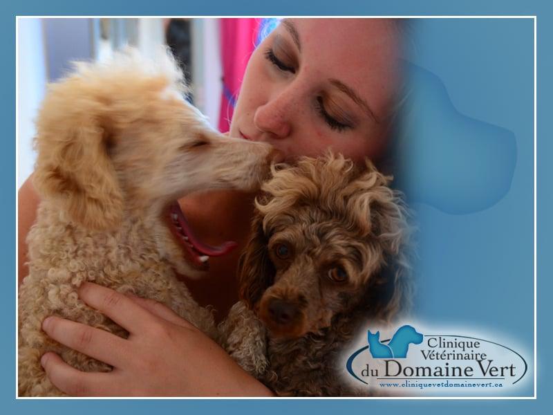 Audrey Roberge | Équipe Clinique vétérinaire du domaine vert, Mirabel