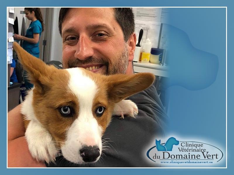 Patrick Lewis, Docteur en médecine vétérinaire | Équipe Clinique vétérinaire du domaine vert, Mirabel
