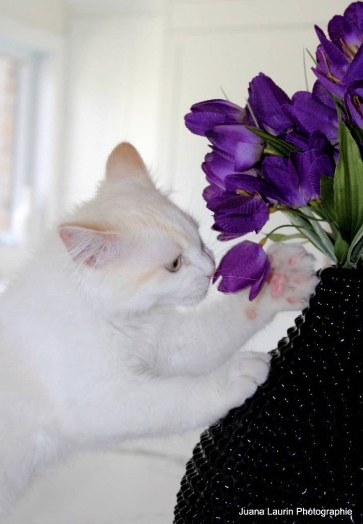clinique veterinaire domaine vert mirabel client satisfaits 00001
