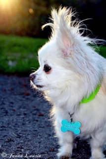 clinique veterinaire domaine vert mirabel client satisfaits 00011
