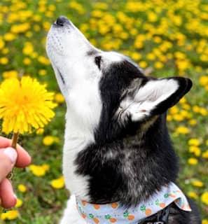 clinique veterinaire domaine vert mirabel client satisfaits 00022