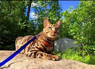 clinique veterinaire domaine vert mirabel client satisfaits 00034