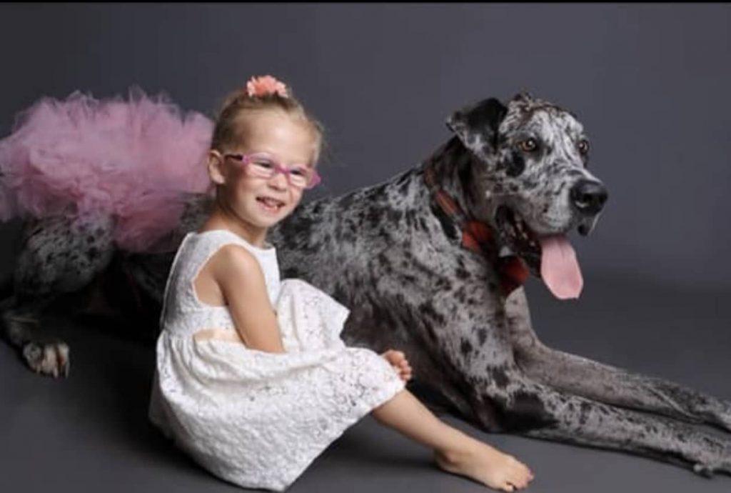 clinique veterinaire domaine vert mirabel client satisfaits 00036